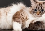 7 Facts You Probably Not Realize About Your Kitty