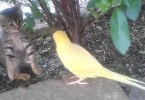 Parrot Tries To Make Friends With Cute Kitten