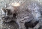 Poor Stray Kitten Was Left To Die In The Streets, Was Luckily Rescued By This Kind Woman