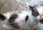 Abandoned Kitten Forgotten By Everyone, Smiles When She Sees The Rescuers