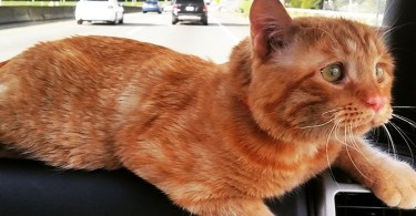 Saddest Cat In The World Ignored By Everyone Is Finally Adopted By Kind Couple