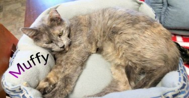 Shelter Staff Can`t Stop Crying When a 15 Years Old Cat Finally Found A Home After Waiting for 5 Years