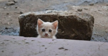 Stray Kitten Asking For Help And Following This Man To His Home Decided To Stay With Him!