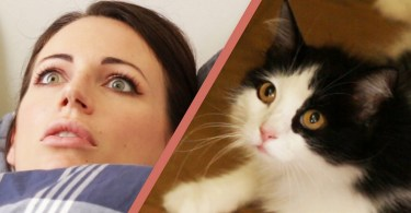 10 Sure Signs Your Kitty Owns You
