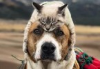 Cute Dog Taking Care Of His Best Friend – Adopted Kitten On Their Adventures