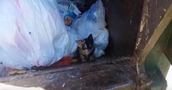 Garbage Man Emptying The Can Into His Truck Noticed Small Kitten And Rescued Him