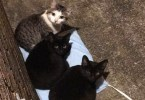 Man Put A Heating Pad For The Neighborhood Stray Cats And They Like It - Copy