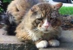 Poor Stray Cat Living A Hard Life, Never Felt Love Before , But Then This Woman Noticed Him...