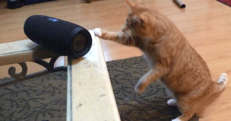 Blind Cat Has Amazing Reaction To Song Made Specifically For Kitties