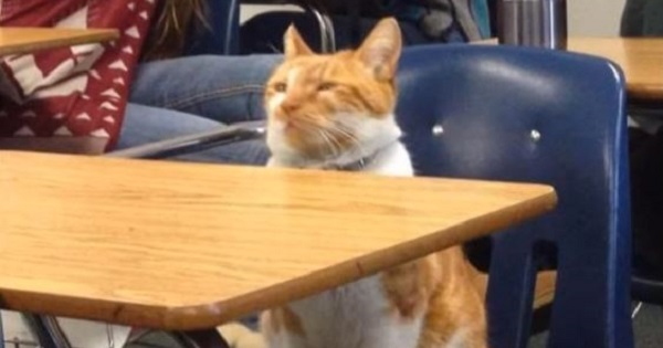 Cat Who Loves Going To Classes Every Day Got Special Surprise