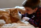 Touching Reunion Of A 11-Year-Old Missing Cat And Boy