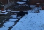 Cat Doesn`t Know How To React After Her First Experience With Snow
