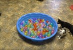 Owners Made Colorful Ball Pit For Their Kittens And They Couldn`t Be More Happier