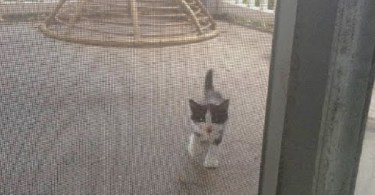 Stray Kitten Appeared At The Door Begging To Come Inside And Turns Out It's A Miracle