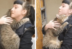 Shelter Cat That Loves To Be Held In Hands Finds Forever Home