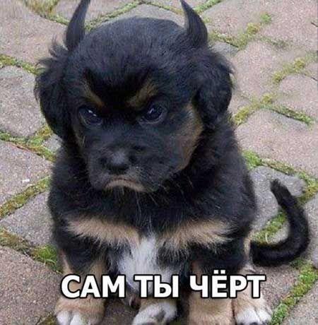 Прикольные картинки собак с надписями. Смешные фото с ...