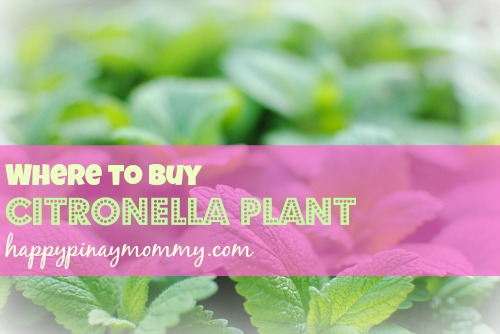 Where to buy Citronella Plant in the Philippines