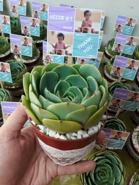Mommy Earth Succulent Givewaways