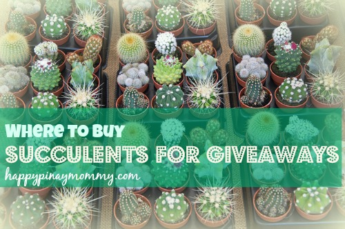 Where To Buy Succulents For Giveaways In The Philippines