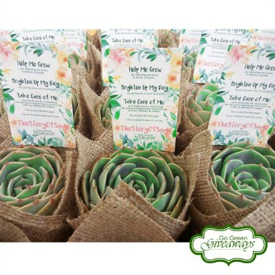Go Green Giveaways supplies Succulent giveaways for Binyags, Birthdays, Weddings, and event Corporate Events