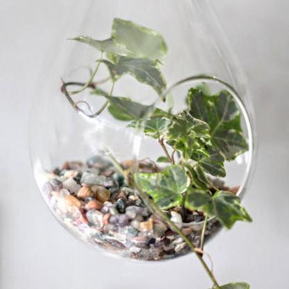 teardrop terrarium 2