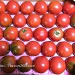 天なりトマトをお歳暮にいただく・トマトの旬はいつ?天なりトマトの味と栄養まとめ