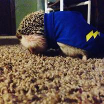 So last night I was excited to finally find a cape for Gatsby, but he wanted to be a princess.