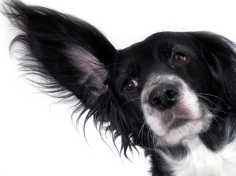 5 Things Your Dog Wishes You Knew