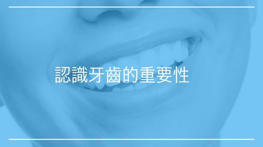 認識牙齒的重要性