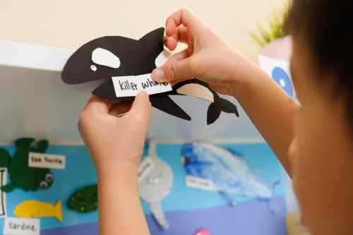 Killer whale craft for kids