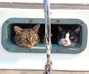 Sailing kitties: Tosh & Tikka, living the Happy Well Lifestyle