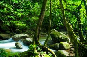 Detox Your Life for Better Health Tropical Rainforest