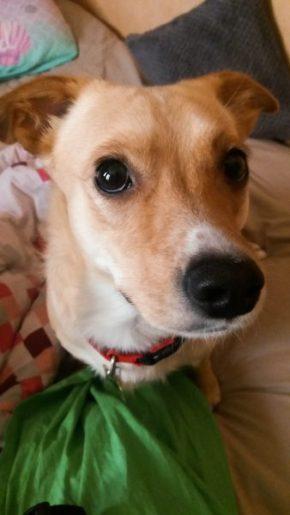 20170310 143007 338x600 - La Doggy Ball Selfie de Wanimo #Happyselfie