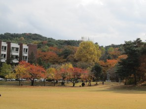 Fall colors at KIST ..