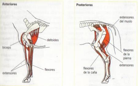 Gimli (SPC) desarrollando su musculatura (3/5)