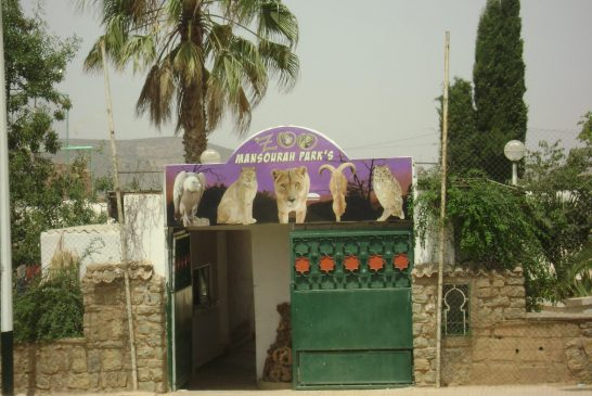 zoo Mansourah Parc - tlemcen
