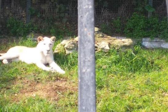 Cercle des Fauves - Parc Zoologique 4 - Credit Harba-DZ