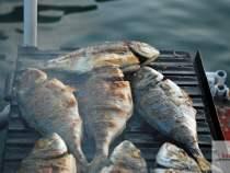 Balık Izgara - Dalyan Dolunayda Tekne Turu