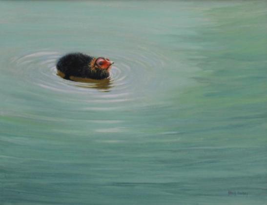David Cowdry ' -Coot Chick