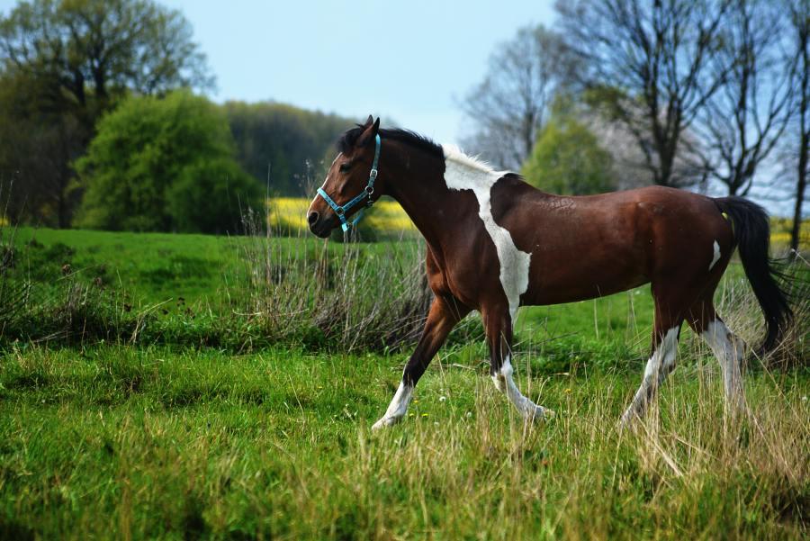 animal-animal-photography-countryside-459341.jpg