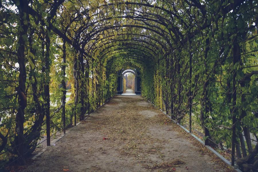 bindweed-corridor-garden-59599.jpg