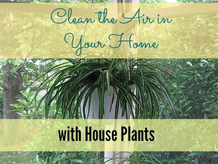 houseplant2
