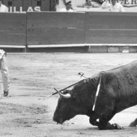 Las despedidas de los toreros: Luis Procuna