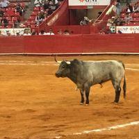 Clamoroso triunfo de la ganadería de Piedras Negras en la Plaza México