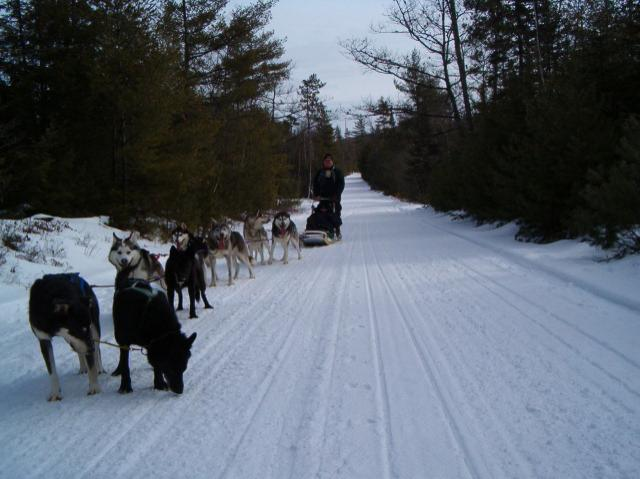 dog sledding at Hardy Farm