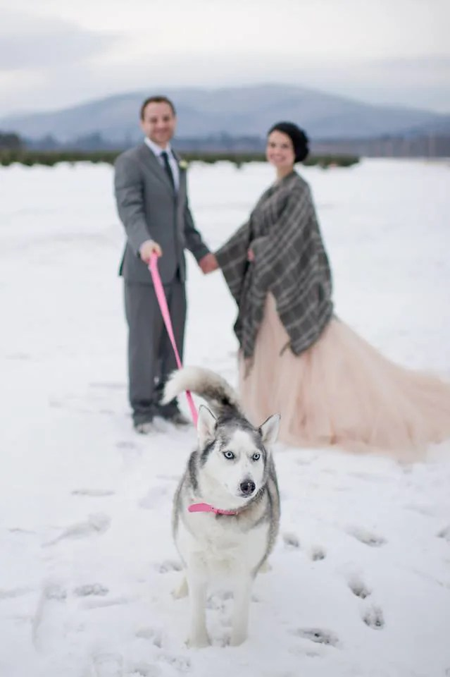 Just Married walk with husky in the winter