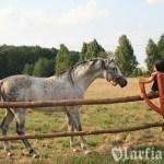 Z ogierem arabskim Mango hodowli SK Niewierz (fot. Sikora)