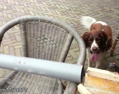 Forever Alone: Dogs Playing By Themselves