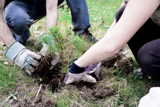Harford County Planting 200 Trees on March 25 to Celebrate Arbor Day 2016