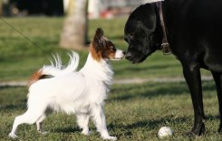Harford County Opens New Dog Park in Abingdon